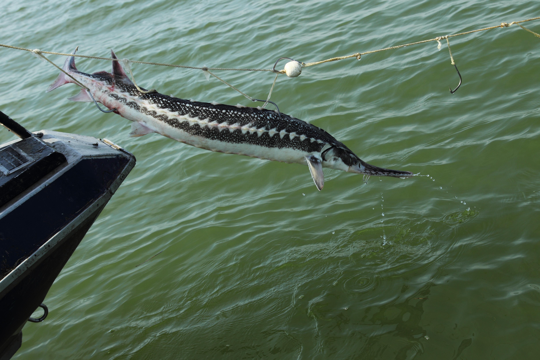 Как сделать перемет и ловить рыбу, не нарушая закон? 70