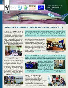 LIFE Sturgeons Newsletter2 29Jan2018 final 232x300 - Project Results