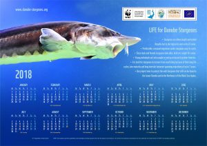 Calendar 2018 Sturgeon EN2 1 300x212 - Our Project Calendar 2018 is Ready for Distribution and Online Download