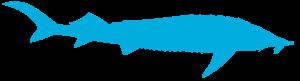 2acipenser ruthenus 300x81 - До Всесвітнього дня дикої природи: осетрові риби Дунаю