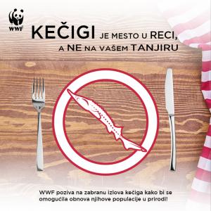 Kečigi je mesto u reci a ne vašem tanjiru  300x300 - Fishermen and conservationists united for five-year ban on fishing Sterlet in Serbia