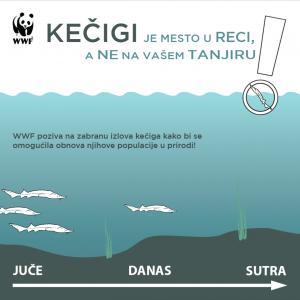 WWF kampanja za zaštitu kečige 300x300 - WWF traži zabranu izlova kečige na pet godina