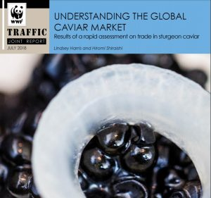 Caviar report 300x281 - Shortcomings in CITES caviar labelling system poses risk to sturgeons