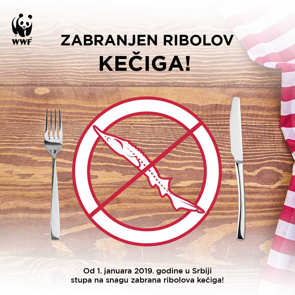 Fishing Sterlet in Serbia is officially banned