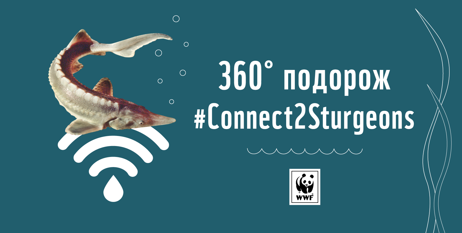Connect2Sturgeons – virtual trip to the world of sturgeons in the Danube Delta