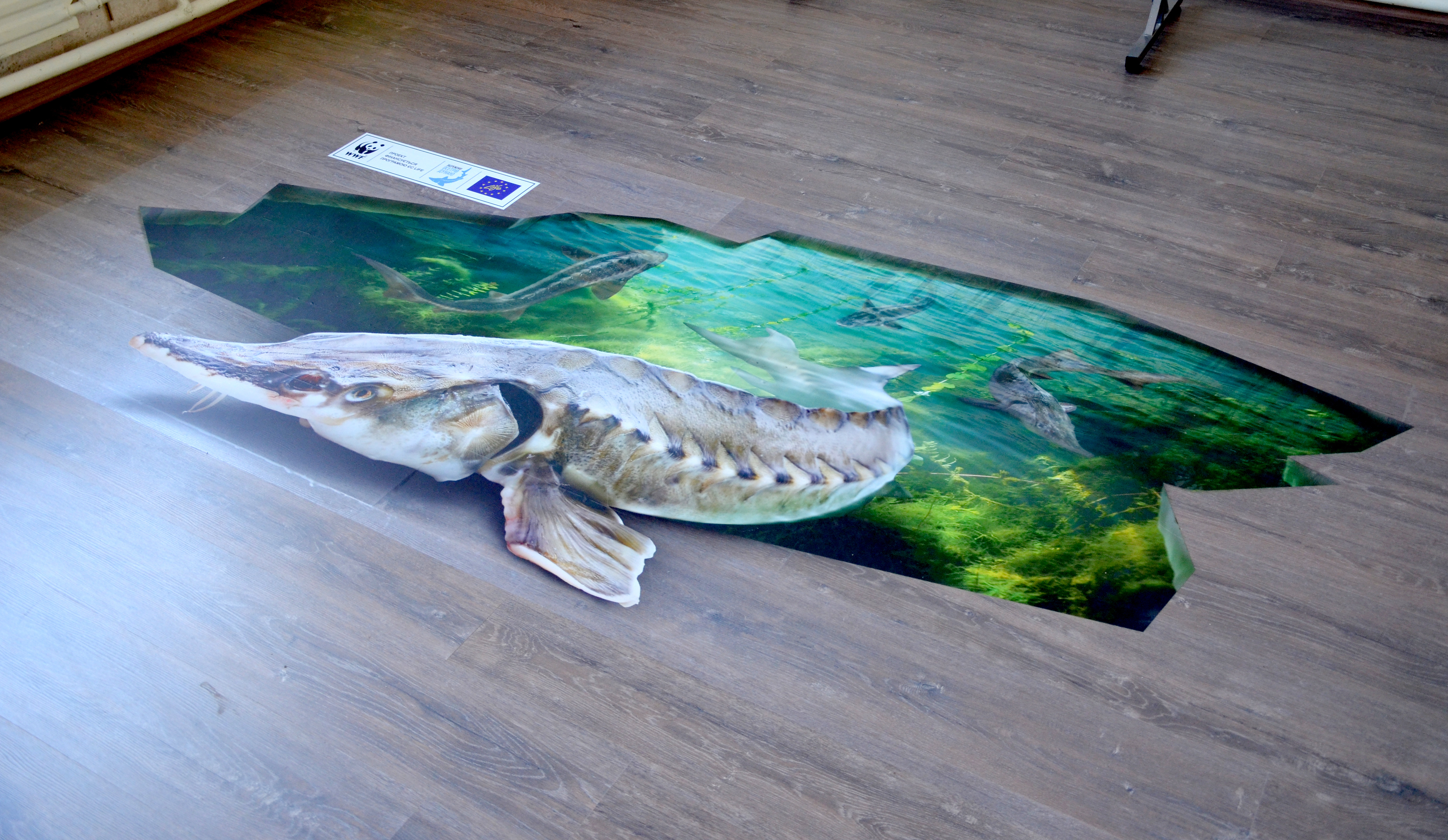 A 3D Sturgeon can be now seen in Vylkovo