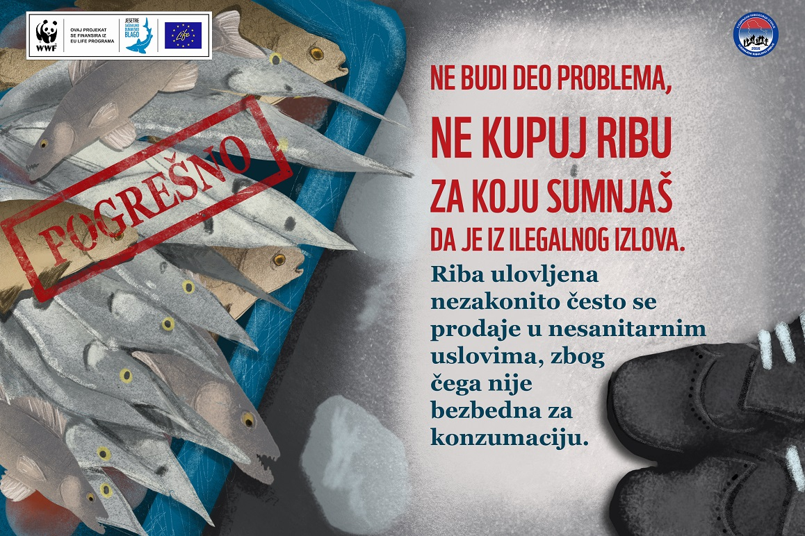 The Serbian Fish Stock under heavy pressure from illegal fishing