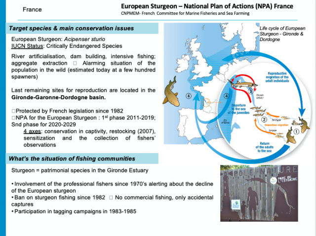 Intro slide France European Sturgeon National Plan of Action France 640x478 - Fishermen have to be Part of the Solution, or they are going to be Part of the Problem