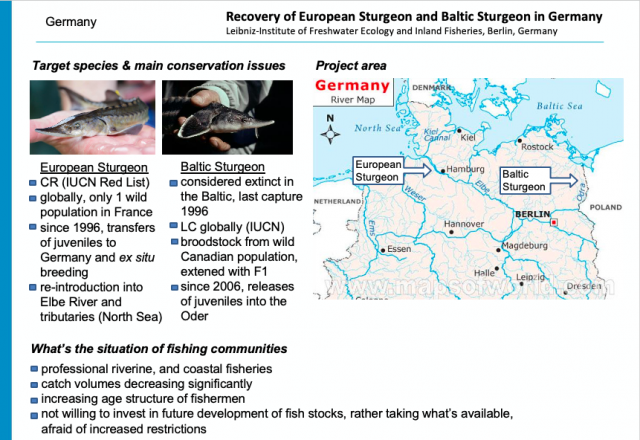 Intro slide Germany European and Baltic Sturgeon 640x440 - Fishermen have to be Part of the Solution, or they are going to be Part of the Problem