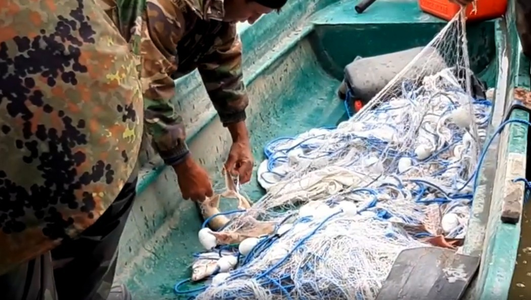 26 sturgeon Caught in Fishing Nets Freed by Romanian Danube Delta Law Enforcement