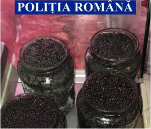 "Untitled 300x257 - ""Coup"" of the Delta Police: Caviar of 50,000 euros confiscated"